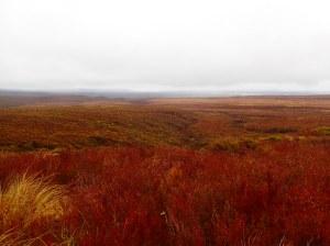 A nice bit of heathland.
